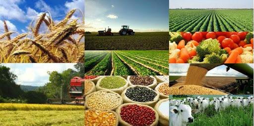 Brasil evoluiu no agronegócio nos últimos 20 anos