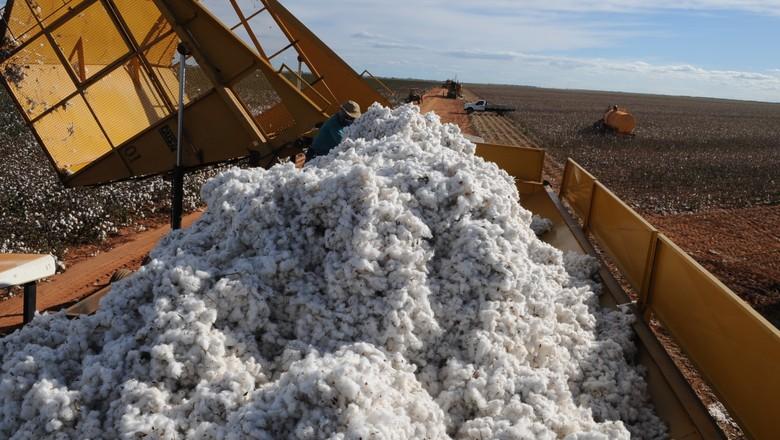 Exportação de algodão tem novo recorde no ciclo 2020/21
